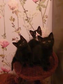 Kittens are ready to leave.