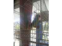 Beautiful Indian Ring Neck Parakeets FOR SALE