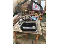 Large black bird cage