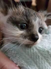 Cute male kittens