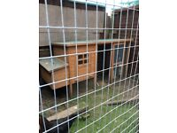 Hen house and 3 chickens all good layers £75