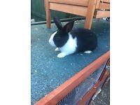 2 baby rabbits left