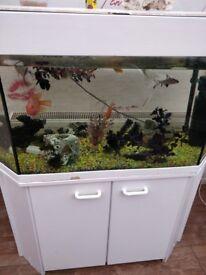 Tropical fish tank Inc fish