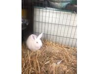 Rabbits for adoption