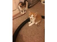 Kittens for sale. £15