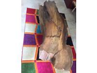 3000 year old bog pine coffee table