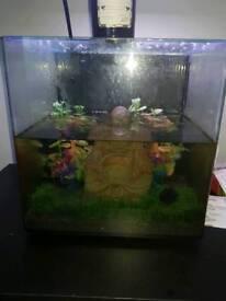 55 ltr fish tank