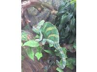 Reptile rescue rehoming