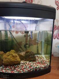 Fighting fish plus tank