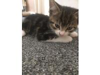 3 BEAUTIFUL KITTENS READY FOR GOOD HOMES