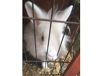 Rabbit hutch with rabbit