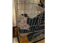 Rat/ferret/degu/chinchilla cage for sale