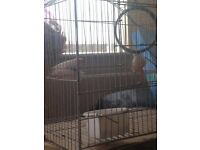 2 FINCHES WITH CAGE £25
