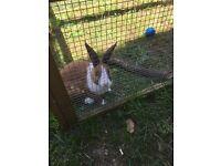 Rabbit, hutch and run