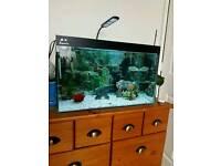 2ft aquarium nice condition