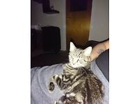 Young male cat needs a new home