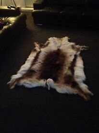 XL grade A reindeer rug lovely markings paid 180 never been used want 100 pick up only