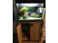 Aquarium with all assessor I and 4walter pups 130
