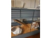 Two female rabbits for rehoming