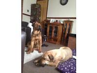 pair dogs