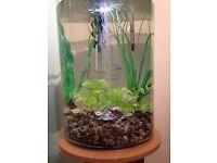 Biube Aquarium (35L)