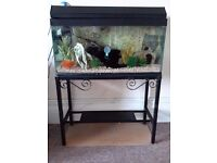 85 L Aquarium plus hood, lighting unit and sturdy metal table
