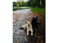 Experienced Dog Walker/ Pet Sitter covering Glasgow NorthWest