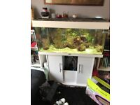 Juwel 250 fish tank