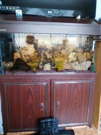 fish tanks x 2