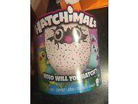 Hatchimal Teal *brand new*