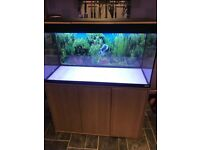 Fluval Roma 200 marine tropical cold water fish tank aquarium with setup