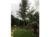 2 mature trees