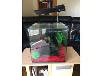 Fish Tank & stand with accessories