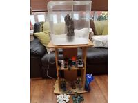 Biorb flow 30 litre aquarium fish tank with stand, tropical equipment and decoration
