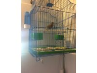 Singing male canary with cage