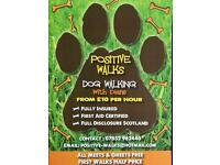 Positive walks dog walking/ Dog walker Glasgow southside