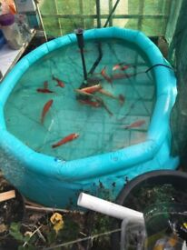 fish fo sale over 20 of them