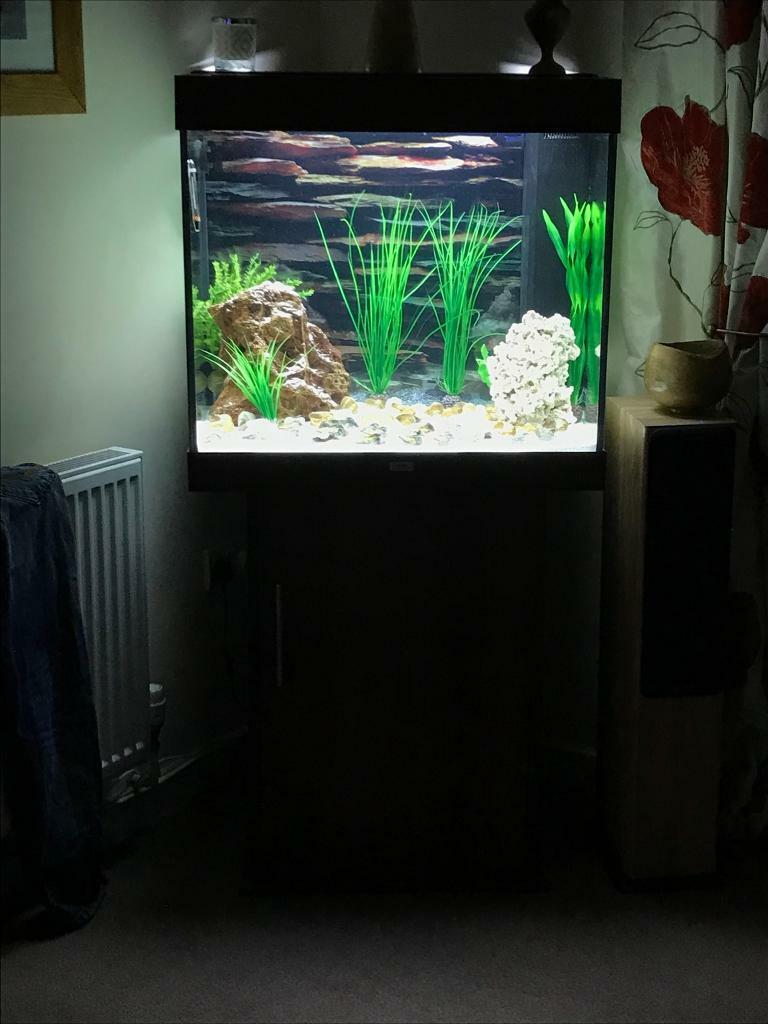 juwel lido 200 aquarium less than a year old in exeter devon gumtree. Black Bedroom Furniture Sets. Home Design Ideas