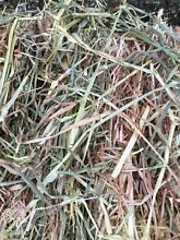 Oaten and Wheaten Hay Mirboo North South Gippsland Preview