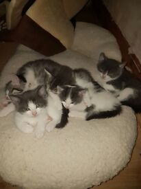 Adorable kittens ready for new homes