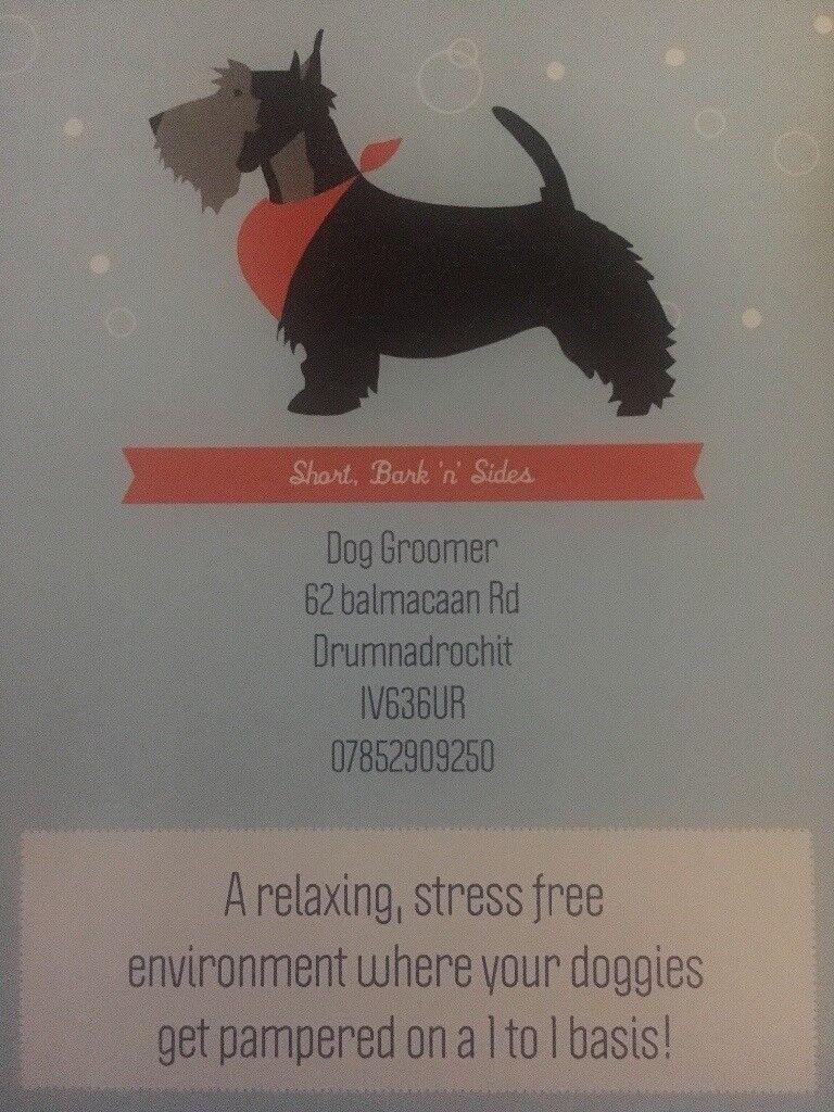 Short bark n sides dog groomer