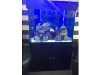 Seabrae fishtank