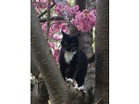 Missing black&white tom cat !!!