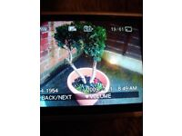 Growing conifer tree on planter