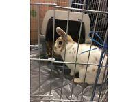 Rabbits for loving homes