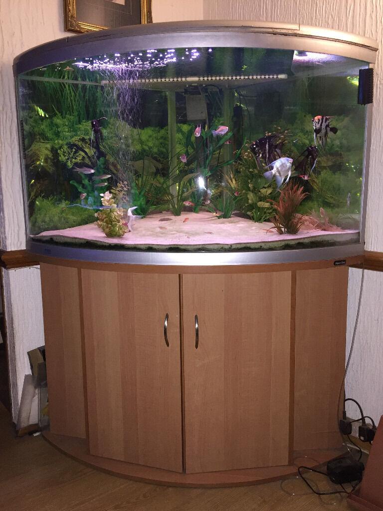 Aqua One Ufo 880 Corner Aquarium In Bridge Of Weir