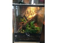 **PRICE DROP**Pair of tokay geckos and young live planted tank