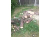 Free wooden logs for collection