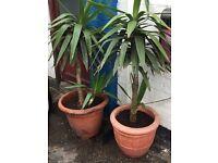 2 plant trees