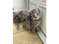2 Kittens ready to go